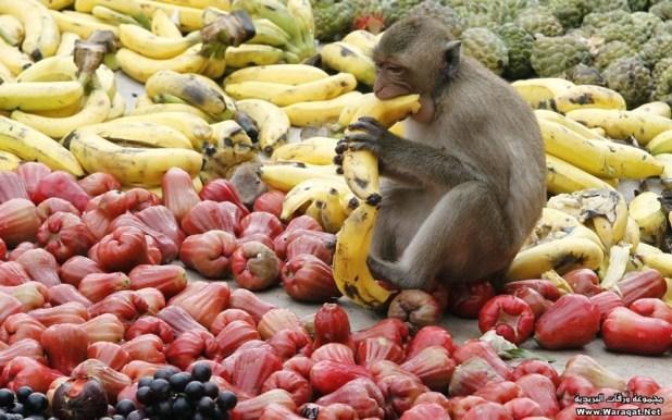 monkey (14)