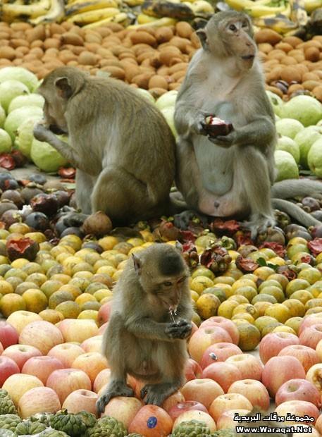 monkey (19)