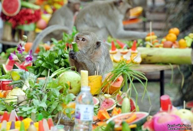 THAILAND-FESTIVAL-ANIMAL-MONKEY