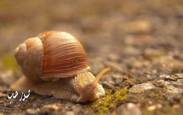 صور حيوانات خلفيات حيوانات كيوت روعه اجمل الكائنات