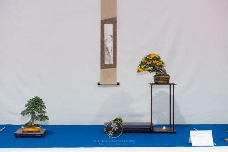 Pyracantha, Cotoneaster dammerii - Bruno Wijman