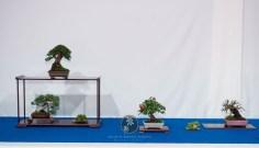 Taxus baccata, Juniperus chinensis, Pyracatha, Ulmus - Morten Albek