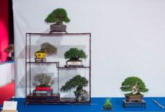 Pinus thunbergii, Ligustrum obtisifolium, Pyracantha angustifolia, Premna angustifolia, Premna japonica, Eleagnus pungens - Jose Acuña Cruz.