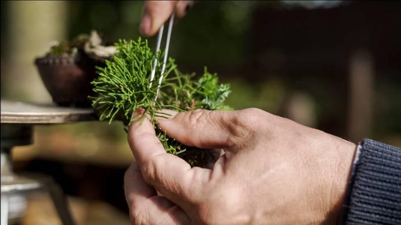 EMPIRE-bonsai-pots-basics.00_00_55_23.Still009