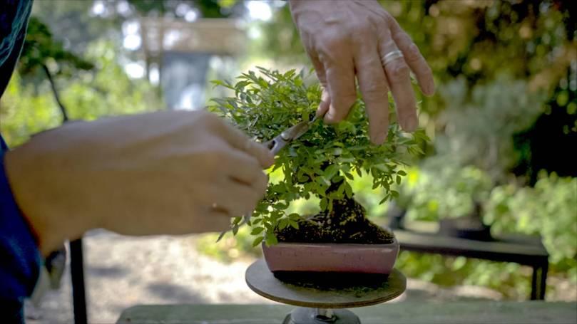 EMPIRE-bonsai-pots-basics.00_01_04_03.Still010