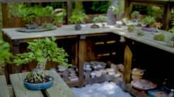 EMPIRE-bonsai-pots-basics.00_01_39_19.Still017