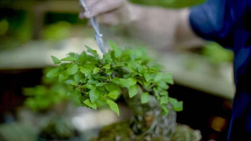 EMPIRE-bonsai-pots-basics.00_01_48_23.Still018