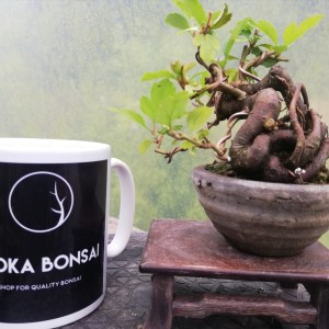 Japanese Crab apple Bonsai