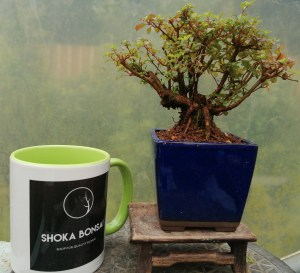 Fuchsia Microphylla Bonsai tree