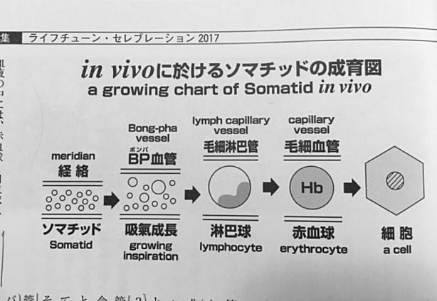経路造血のボンパ血管とソマチッド