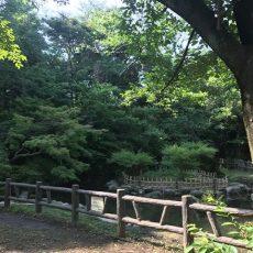 御幣公園のカワセミ