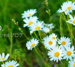 【小林麻央さんのブログから学ぶ】〜50代主婦が考える自分軸とは?