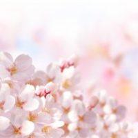 【お花見の季節に思い出す、桜と幸せの関係についてのお話】