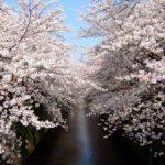 春の桜ランチにピッタリ!おススメの50代主婦ファッション