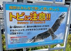 湘南散歩は上空注意:江ノ島片瀬海岸でお弁当を狙うトンビ(トビ)