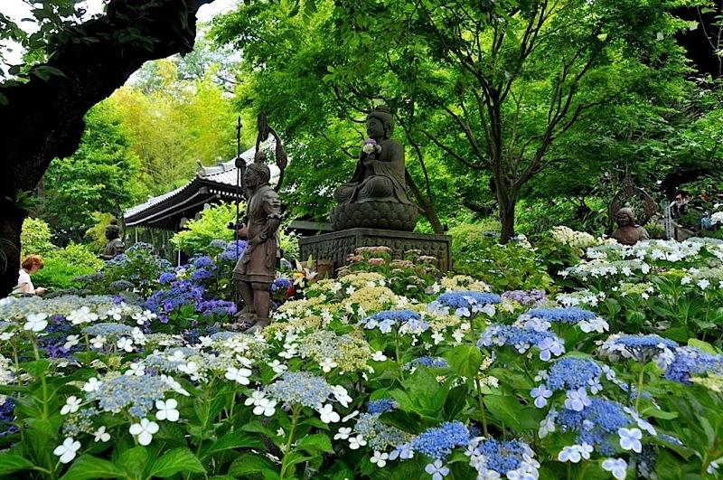 鎌倉の紫陽花(アジサイ)チェック2015:長谷寺の仏像と紫陽花