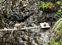 江ノ島のパワースポット江の島岩屋洞窟のリス