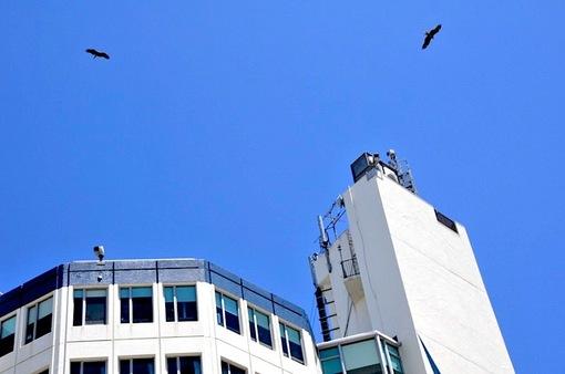 湘南片瀬東浜江ノ島ビュータワーのお天気カメラ(ライブカメラ)