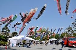 白旗神社@藤沢の牛若祭りの鯉のぼり