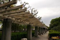 藤沢新林公園のフジとフジロード
