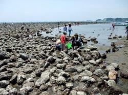 鎌倉材木座の干潮で現れる和賀江島