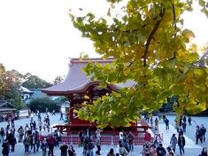 鎌倉の紅葉スポット鶴岡八幡宮の大銀杏と舞殿
