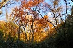 鎌倉紅葉スポット天園ハイキングコースの獅子舞