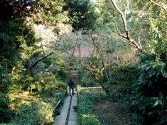 鎌倉紅葉スポット鎌倉駅周辺の妙法寺