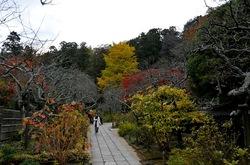 北鎌倉東慶寺山道の紅葉
