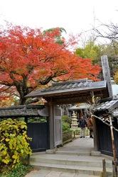 北鎌倉東慶寺本堂前の紅葉