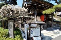 北鎌倉の梅花チェック長谷寺の山門