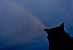 藤沢の空に虹