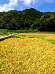 湘南藤沢から五島列島へ久賀島の田園風景