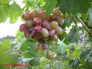 Восторг Красный 2012