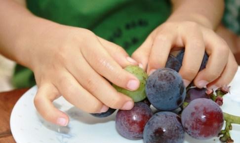 ぶどうは誤飲、窒息のリスクが高い果物 事故症例を解説します