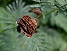 Illinois Bundle Flower--Fall