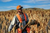 Pheasant Hunting in South Dakota