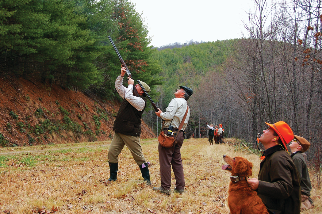 Pheasants of Primland