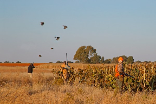 Wingshooting at Bird Hunters Africa