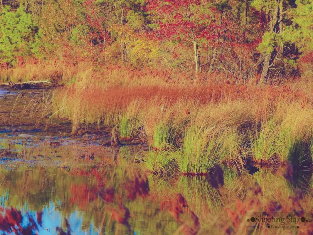 beautiful fall colors-Edit