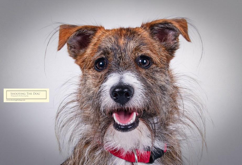 Dog & Pet Portrait - What Happens Next