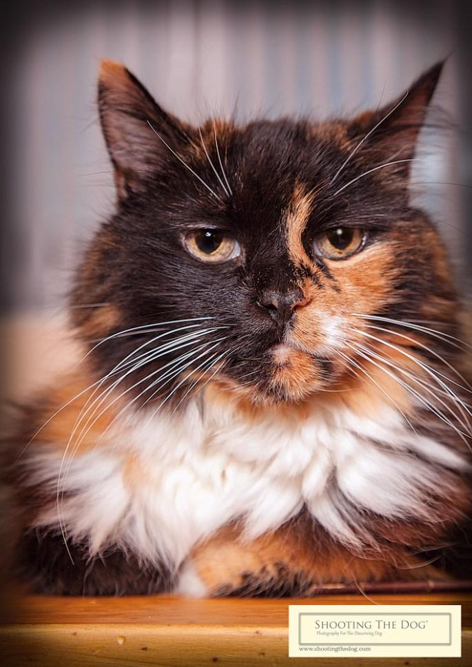 Cat Photography Brixham. Torbay. Devon