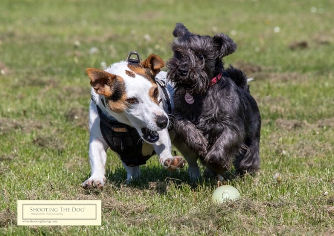 The chase for the ball