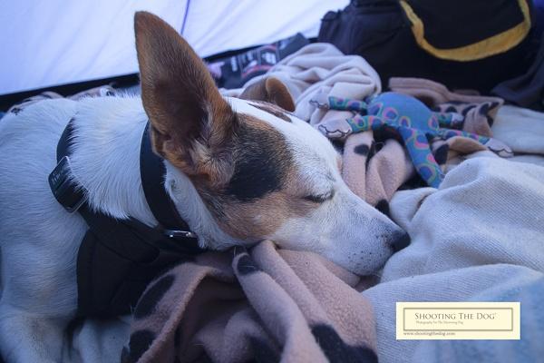 Camping - Sleepy Dog