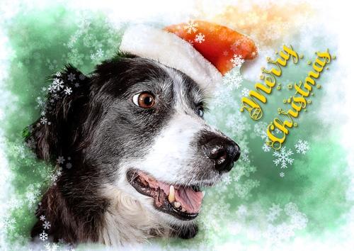Molly Christmas Card