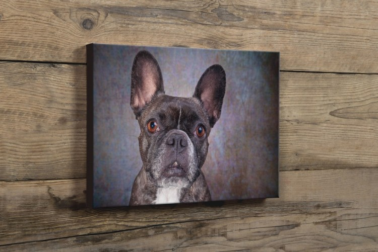 Dog Photography Product Samples