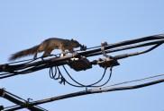 Squirrel-DSC_6308_edited-2