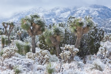 Snowblast in the Mojave Desert 2018