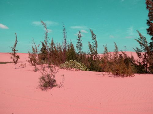 dry pink desert