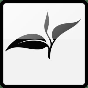 Schwarzer Tee (Schwarztee)
